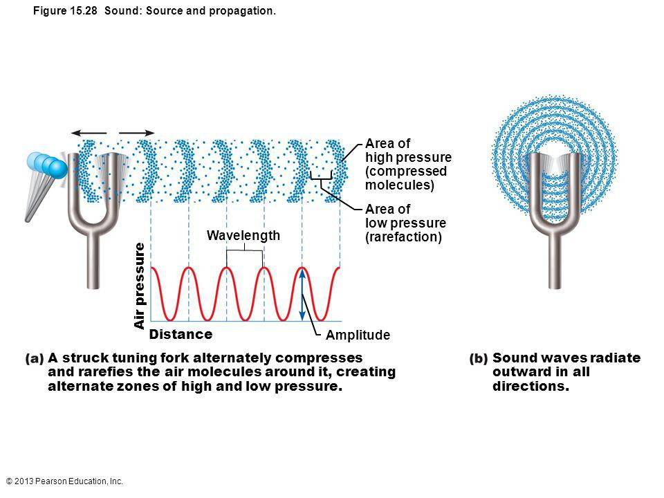 © 2013 Pearson Education, Inc. Figure 15.28 Sound: Source and propagation. Area of high pressure (compressed molecules) Area of low pressure (rarefact