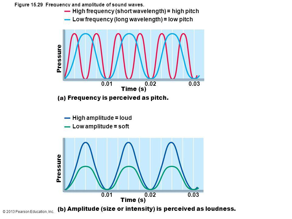 © 2013 Pearson Education, Inc. Figure 15.29 Frequency and amplitude of sound waves. High frequency (short wavelength) = high pitch Low frequency (long