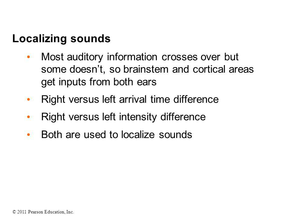 © 2011 Pearson Education, Inc. Localizing sounds Most auditory information crosses over but some doesn't, so brainstem and cortical areas get inputs f