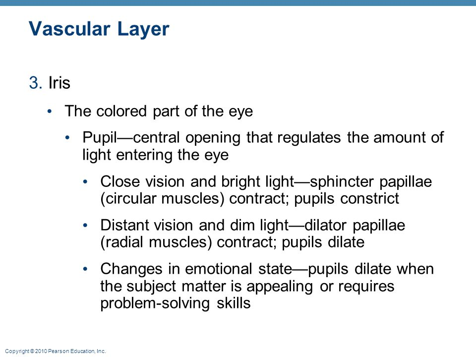Copyright © 2010 Pearson Education, Inc. Vascular Layer 3. Iris The colored part of the eye Pupil—central opening that regulates the amount of light e