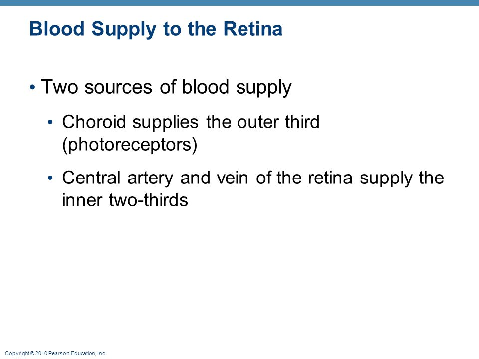 Copyright © 2010 Pearson Education, Inc. Blood Supply to the Retina Two sources of blood supply Choroid supplies the outer third (photoreceptors) Cent