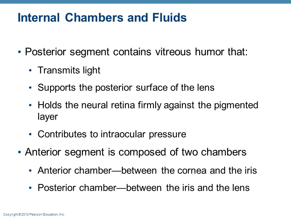 Copyright © 2010 Pearson Education, Inc. Internal Chambers and Fluids Posterior segment contains vitreous humor that: Transmits light Supports the pos