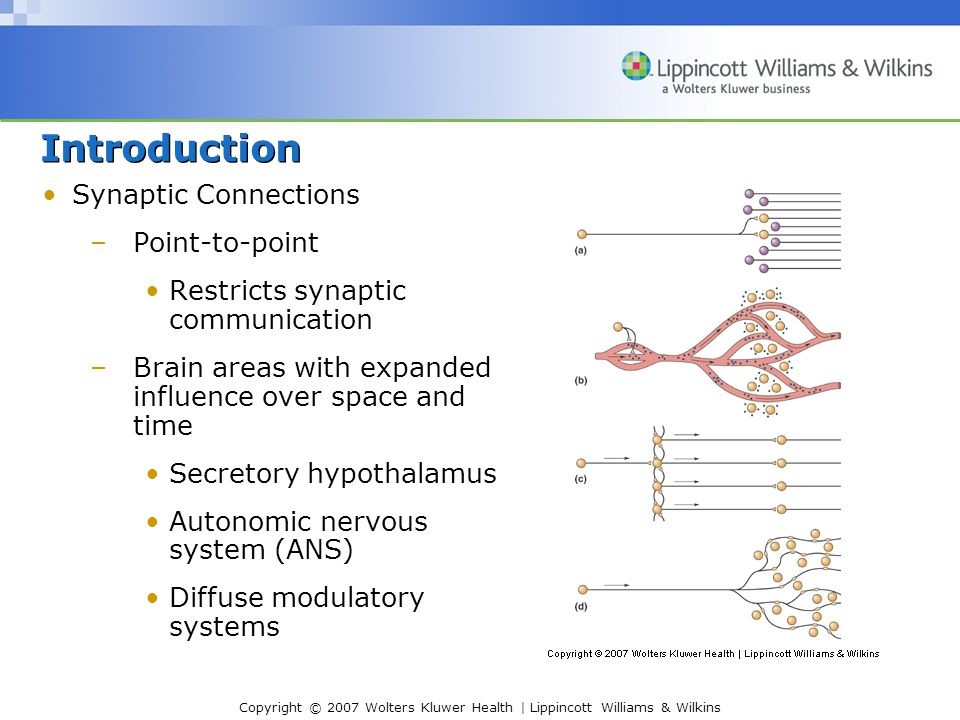 Copyright © 2007 Wolters Kluwer Health | Lippincott Williams & Wilkins Introduction Synaptic Connections –Point-to-point Restricts synaptic communication –Brain areas with expanded influence over space and time Secretory hypothalamus Autonomic nervous system (ANS) Diffuse modulatory systems
