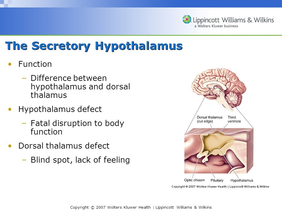 Copyright © 2007 Wolters Kluwer Health | Lippincott Williams & Wilkins Homeostasis –Regulatory process: Regulates body temperature and blood composition Hypothalamus commands in cold weather Shiver, goosebumps, turn blue Hypothalamus commands in hot weather Turn red, sweat The Secretory Hypothalamus