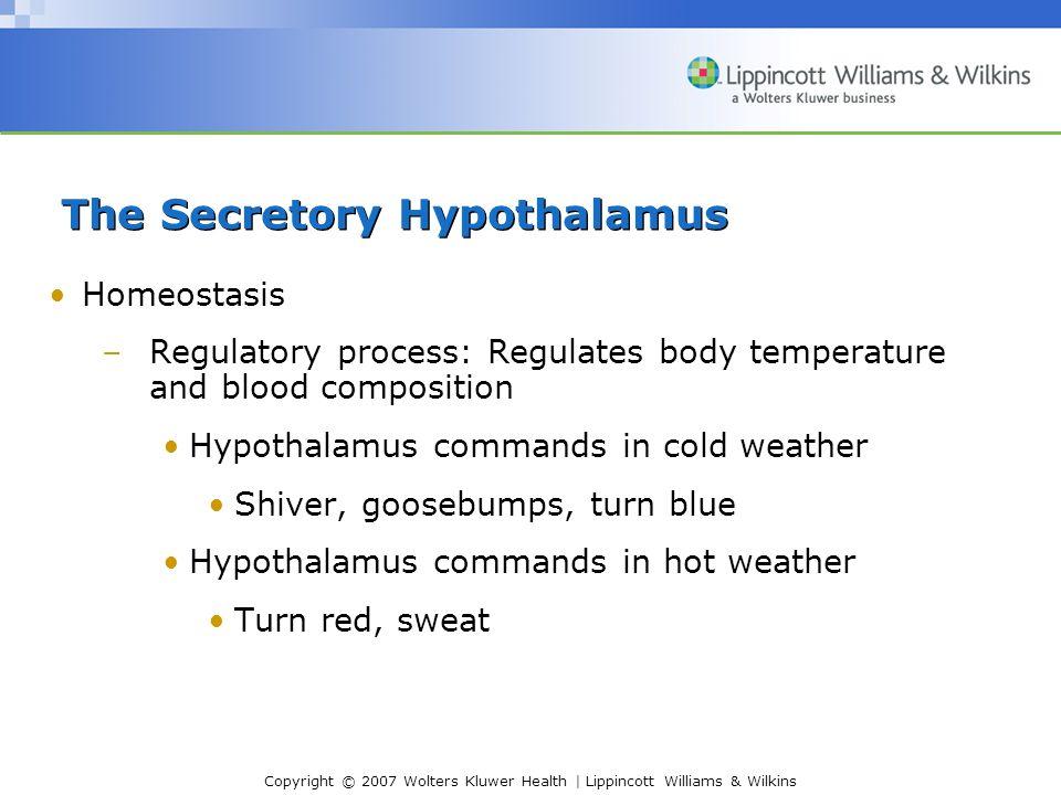 Copyright © 2007 Wolters Kluwer Health | Lippincott Williams & Wilkins The Secretory Hypothalamus Structure of the Hypothalamus