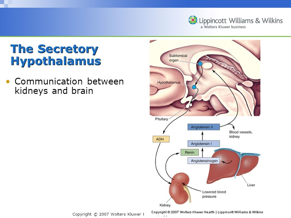Copyright © 2007 Wolters Kluwer Health | Lippincott Williams & Wilkins Anatomy and Functions –Four systems with common principles: Noradrenergic Locus Coeruleus Serotonergic Raphe Nuclei Dopaminergic Substantia Nigra and Ventral tegmental Area Cholinergic Basal Forebrain and Brain Stem Complexes The Diffuse Modulatory Systems of the Brain