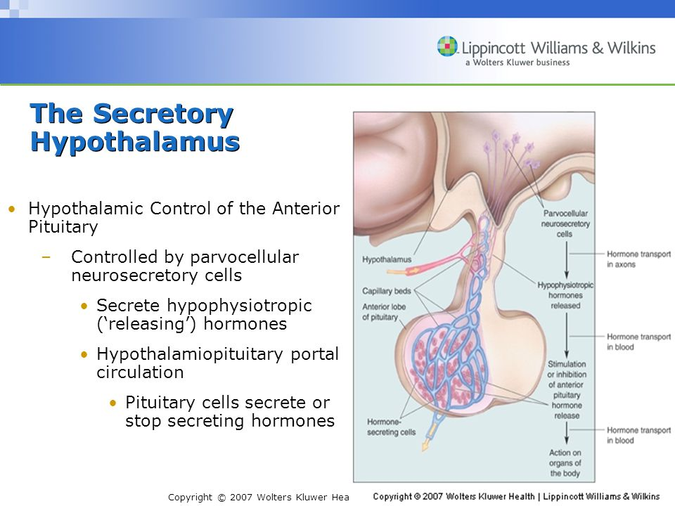 Copyright © 2007 Wolters Kluwer Health | Lippincott Williams & Wilkins Stress Response –Periventricular hypothalamus secretes CRH into portal circulation.