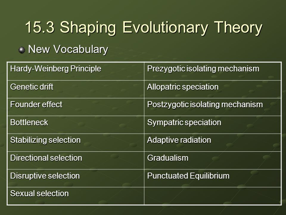 15.3 Shaping Evolutionary Theory New Vocabulary Hardy-Weinberg Principle Prezygotic isolating mechanism Genetic drift Allopatric speciation Founder ef