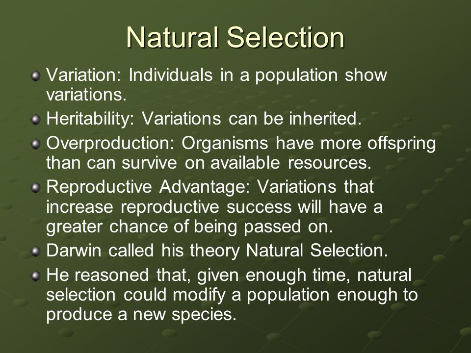Basic Principles of Natural Selection PrincipleExample Individuals in a population show variations among others of the same species.