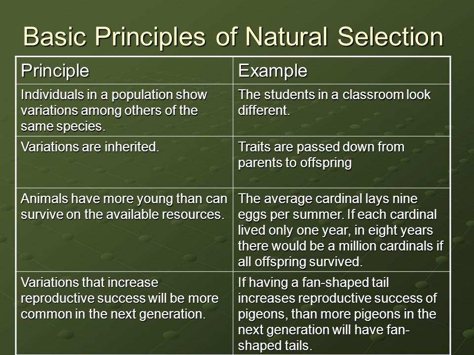 Basic Principles of Natural Selection PrincipleExample Individuals in a population show variations among others of the same species. The students in a