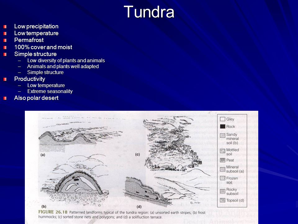 Tundra Low precipitation Low temperature Permafrost 100% cover and moist Simple structure –Low diversity of plants and animals –Animals and plants well adapted –Simple structure Productivity –Low temperature –Extreme seasonality Also polar desert