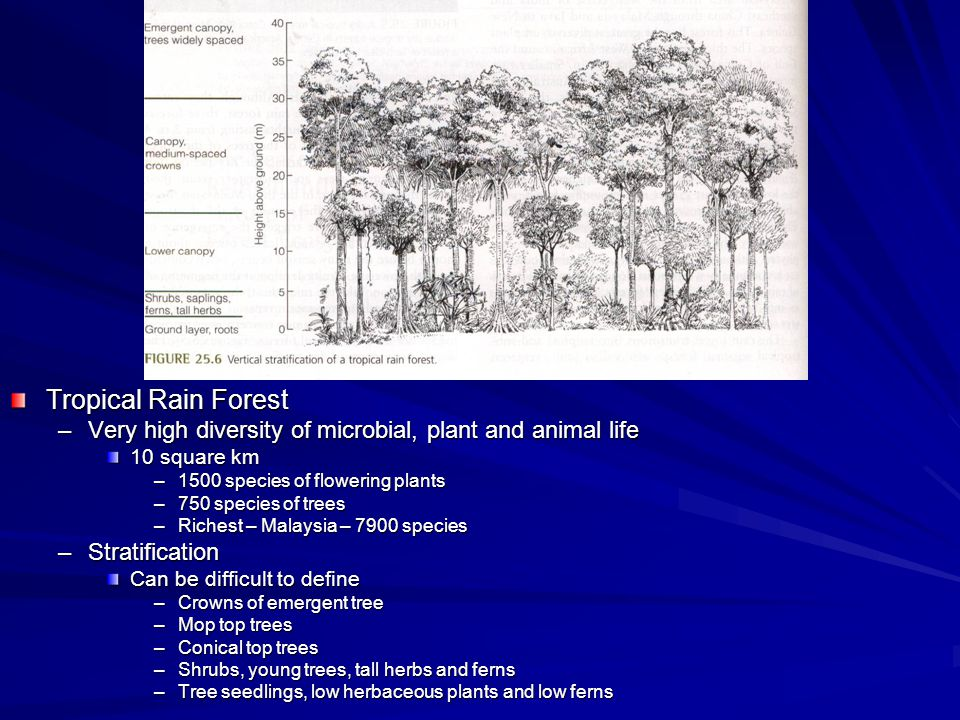 Tropical Rain Forest –Very high diversity of microbial, plant and animal life 10 square km –1500 species of flowering plants –750 species of trees –Richest – Malaysia – 7900 species –Stratification Can be difficult to define –Crowns of emergent tree –Mop top trees –Conical top trees –Shrubs, young trees, tall herbs and ferns –Tree seedlings, low herbaceous plants and low ferns