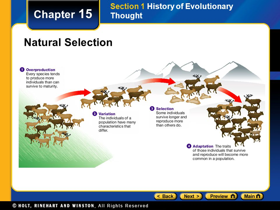 Chapter 15 Natural Selection Section 1 History of Evolutionary Thought