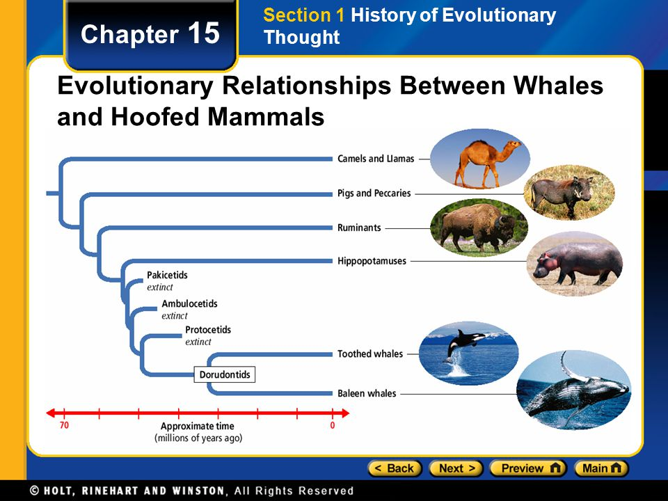 Chapter 15 The Fossil Record Evidence of evolution can be found by comparing several kinds of data, including the fossil record, biogeography, anatomy and development, and biological molecules.