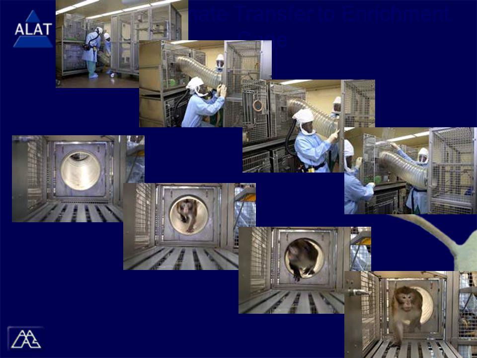 (Image) Primate Transfer to Enrichment Cage
