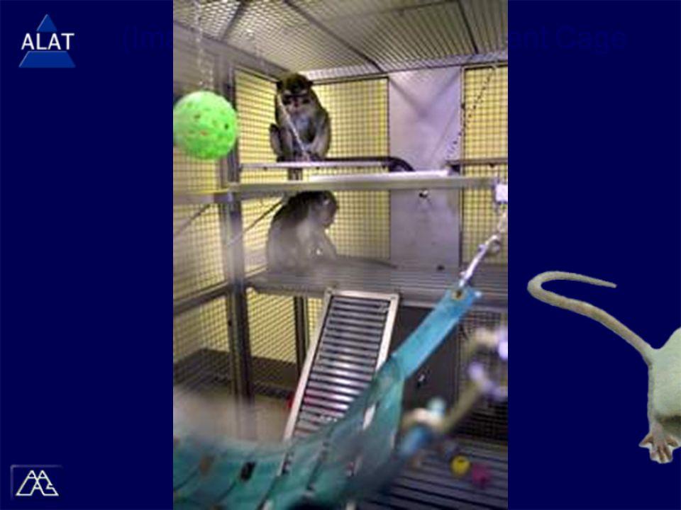 (Image) Primates in Enrichment Cage