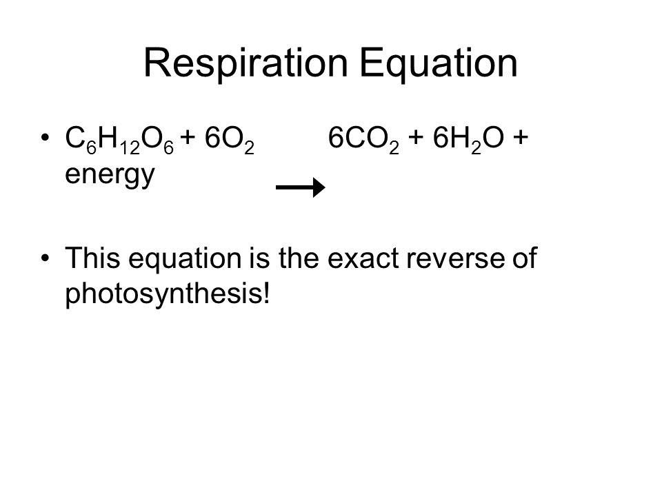 Respiration Equation C 6 H 12 O 6 + 6O 2 6CO 2 + 6H 2 O + energy This equation is the exact reverse of photosynthesis!