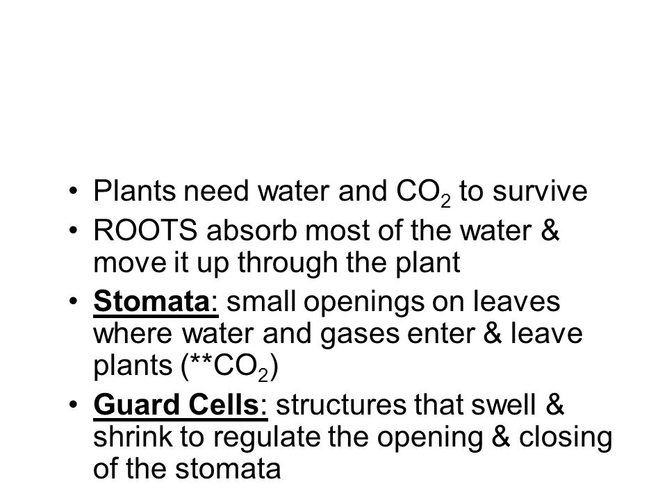 Plants need water and CO 2 to survive ROOTS absorb most of the water & move it up through the plant Stomata: small openings on leaves where water and