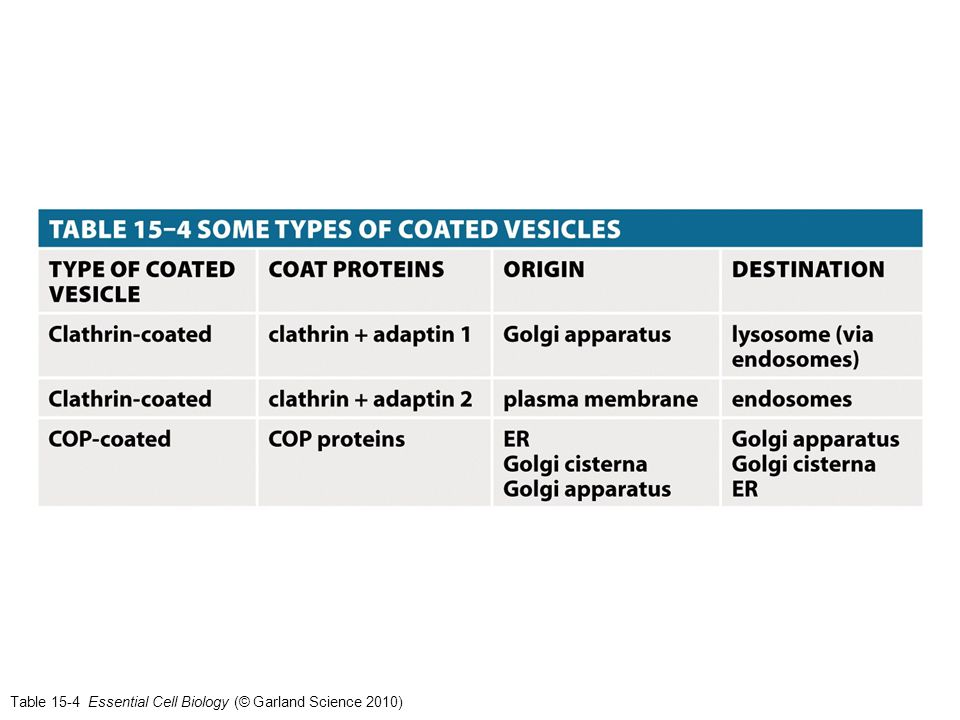Table 15-4 Essential Cell Biology (© Garland Science 2010)