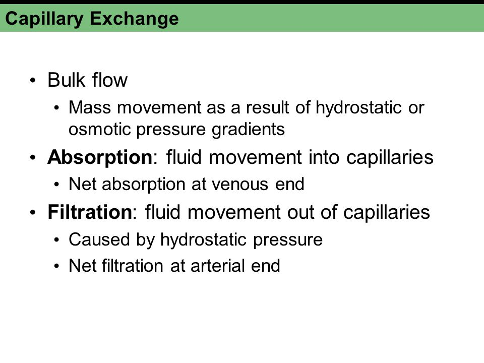 Capillary Exchange Bulk flow Mass movement as a result of hydrostatic or osmotic pressure gradients Absorption: fluid movement into capillaries Net absorption at venous end Filtration: fluid movement out of capillaries Caused by hydrostatic pressure Net filtration at arterial end