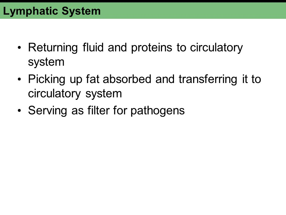 Lymphatic System Returning fluid and proteins to circulatory system Picking up fat absorbed and transferring it to circulatory system Serving as filter for pathogens