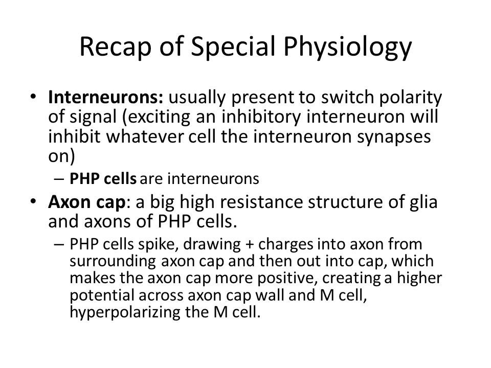 Recap of Special Physiology Interneurons: usually present to switch polarity of signal (exciting an inhibitory interneuron will inhibit whatever cell the interneuron synapses on) – PHP cells are interneurons Axon cap: a big high resistance structure of glia and axons of PHP cells.