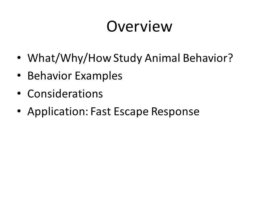 Overview What/Why/How Study Animal Behavior.