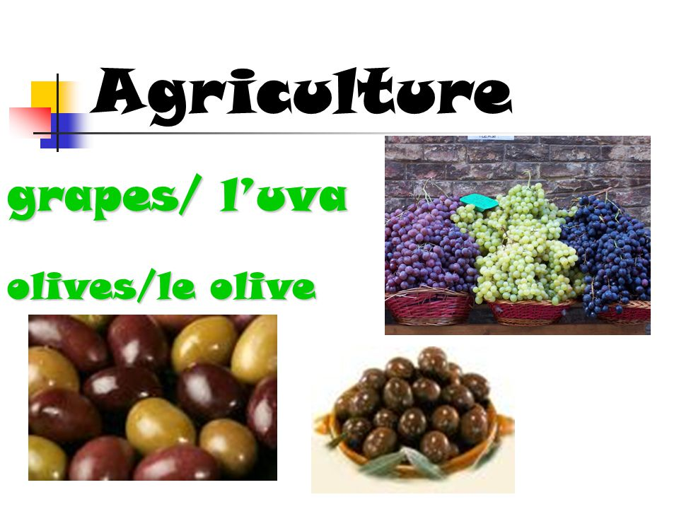 Agriculture grapes/ l'uva olives/le olive