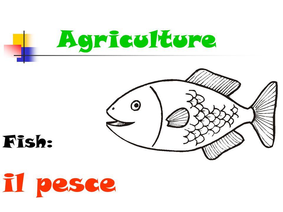 Agriculture Fish: il pesce