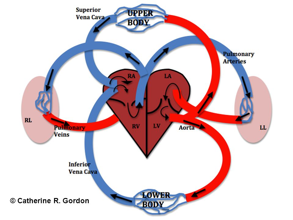 Cardiovascular Emergencies Most causes of CV system failure traced back to cardiovascular disease (CVD) CVD leading cause of death worldwide More than 1/3 of adult population in US has CVD.