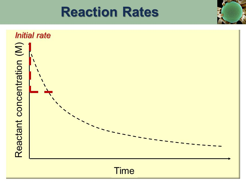Reactant concentration (M) Time Initial rate Reaction Rates
