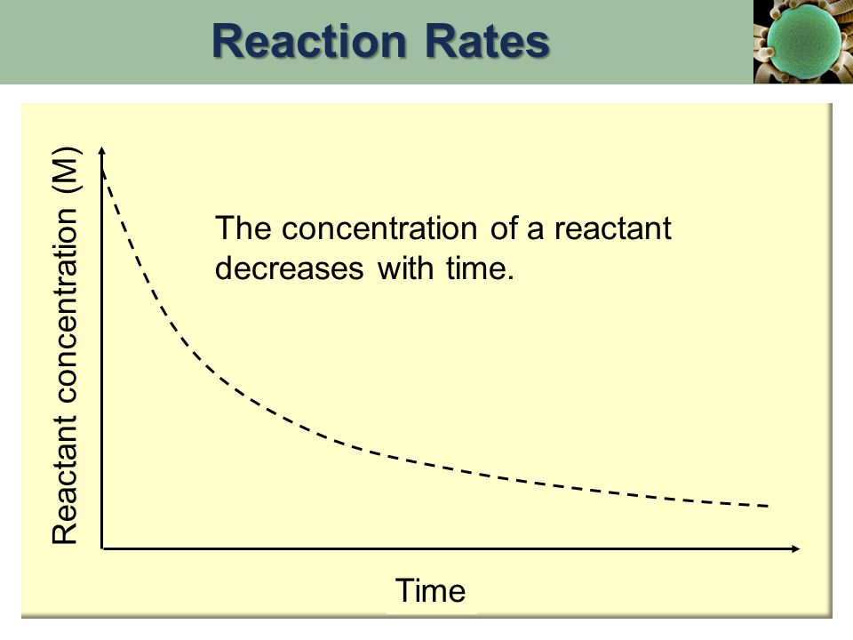 Taking the exponent to each side of the equation: or Conclusion: Conclusion: The concentration of a reactant governed by first order kinetics falls off from an initial concentration exponentially with time.