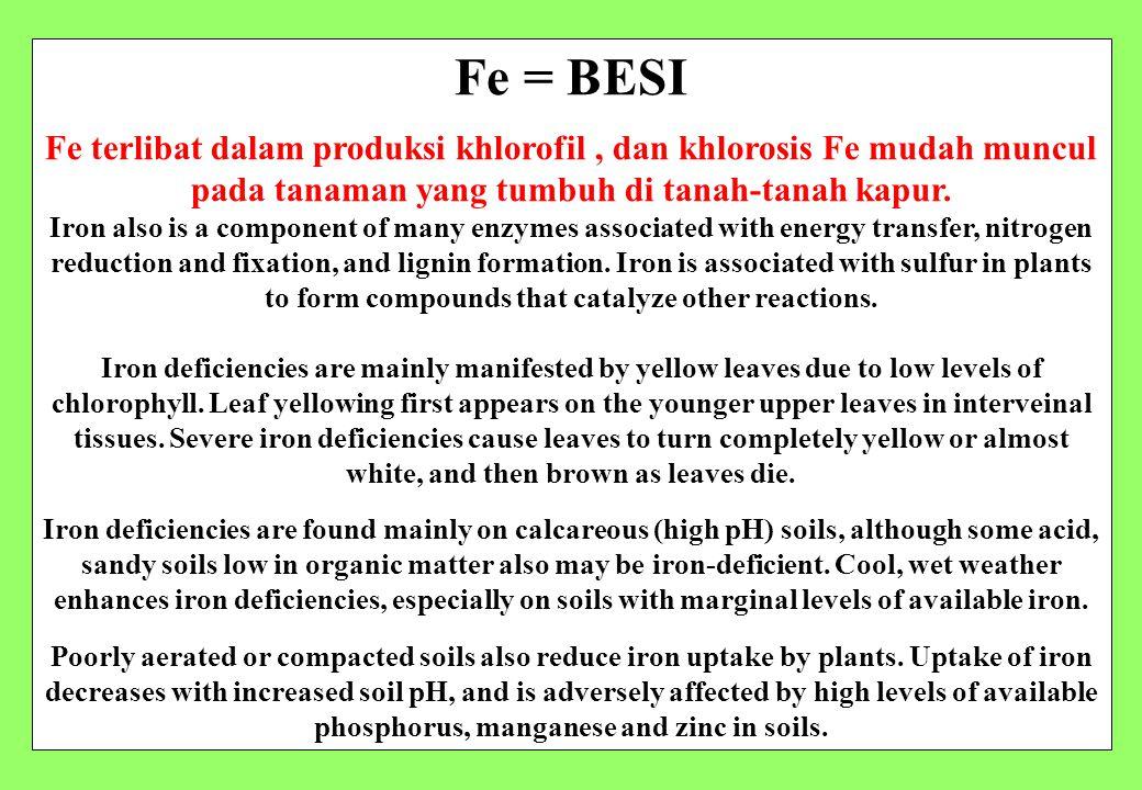 Fe = BESI Fe terlibat dalam produksi khlorofil, dan khlorosis Fe mudah muncul pada tanaman yang tumbuh di tanah-tanah kapur. Iron also is a component