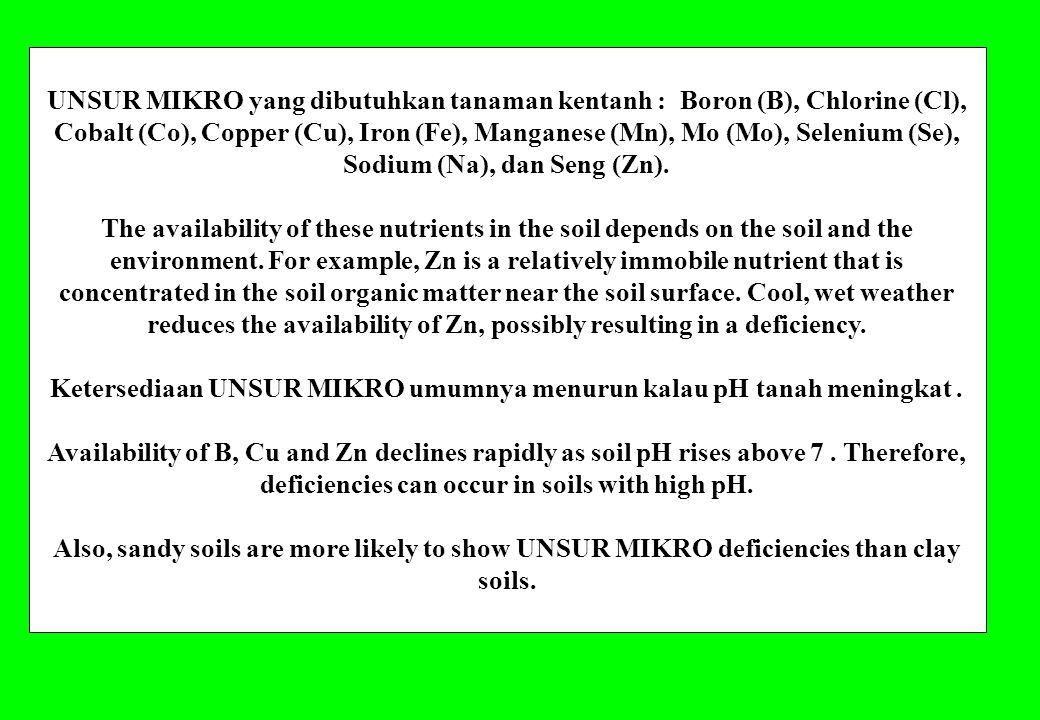 UNSUR MIKRO yang dibutuhkan tanaman kentanh : Boron (B), Chlorine (Cl), Cobalt (Co), Copper (Cu), Iron (Fe), Manganese (Mn), Mo (Mo), Selenium (Se), S