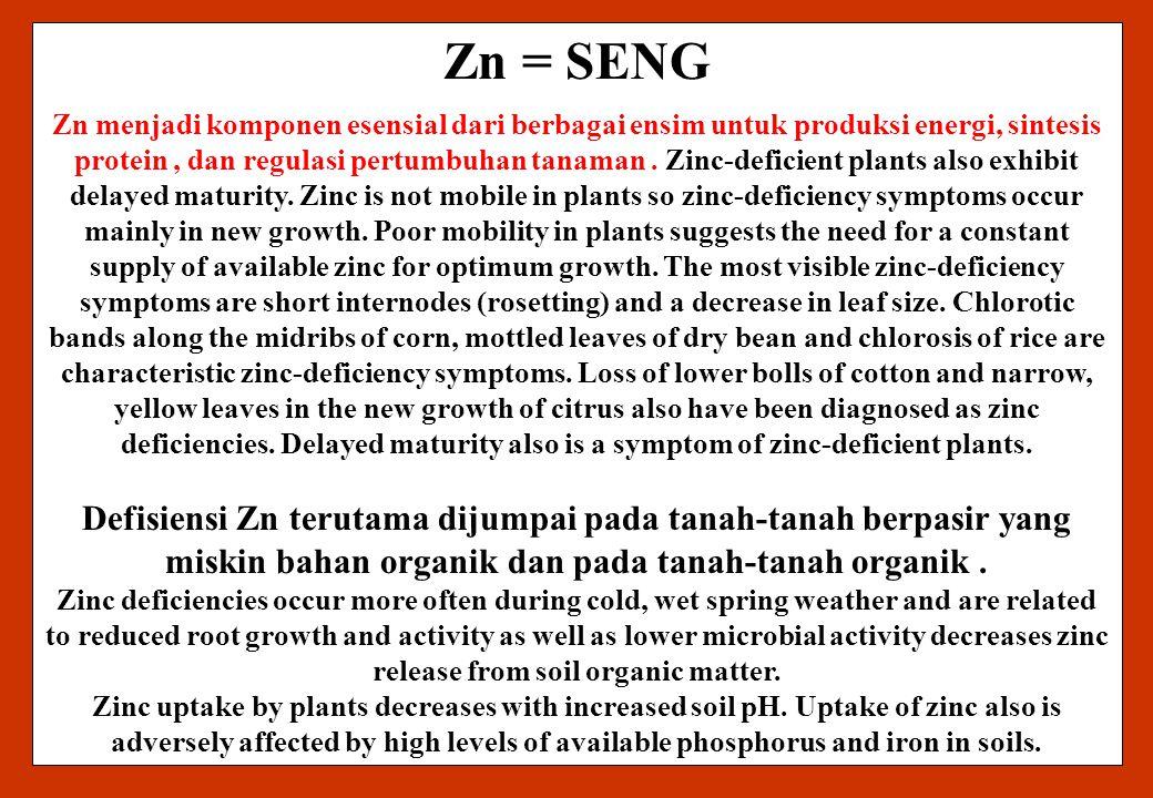 Zn = SENG Zn menjadi komponen esensial dari berbagai ensim untuk produksi energi, sintesis protein, dan regulasi pertumbuhan tanaman. Zinc-deficient p