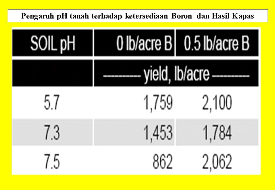 Pengaruh pH tanah terhadap ketersediaan Boron dan Hasil Kapas
