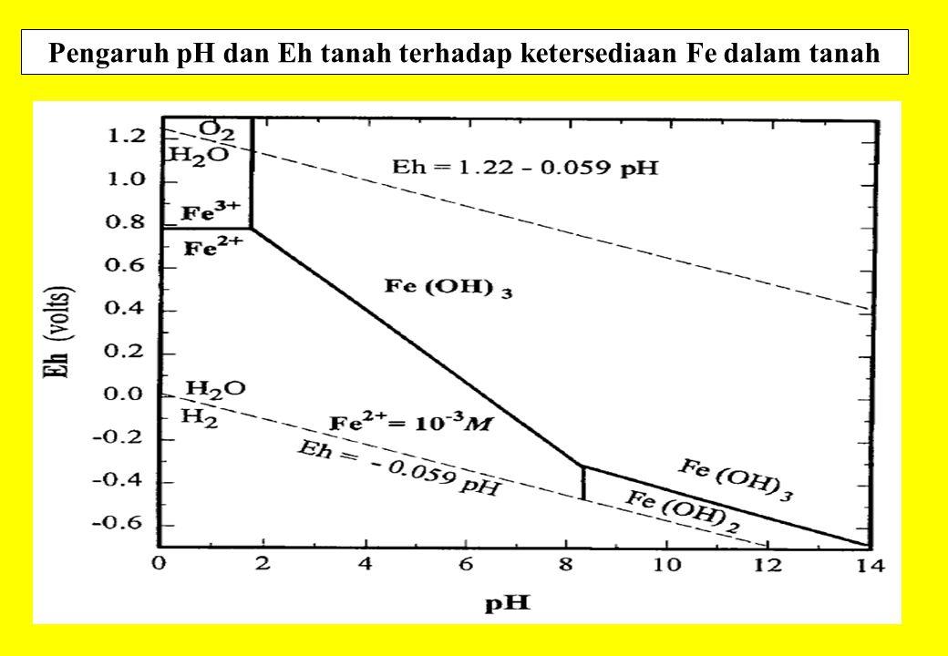 Pengaruh pH dan Eh tanah terhadap ketersediaan Fe dalam tanah