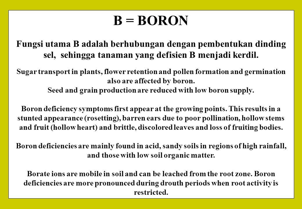 B = BORON Fungsi utama B adalah berhubungan dengan pembentukan dinding sel, sehingga tanaman yang defisien B menjadi kerdil. Sugar transport in plants