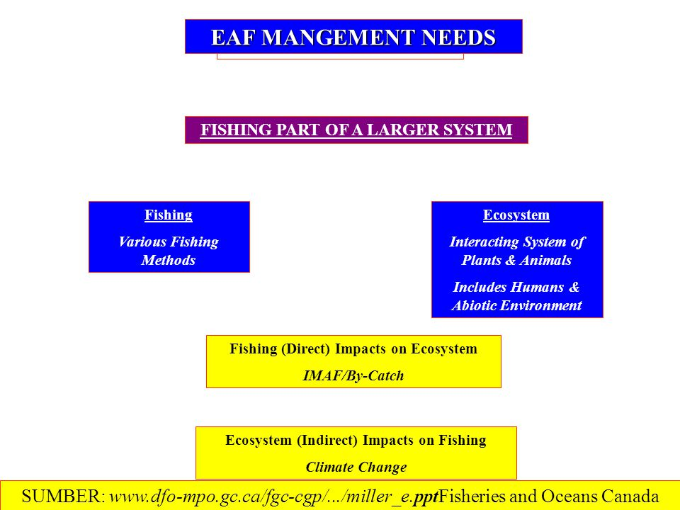 EAF MANGEMENT NEEDS FISHING PART OF A LARGER SYSTEM Ecosystem Interacting System of Plants & Animals Includes Humans & Abiotic Environment Fishing Various Fishing Methods Fishing (Direct) Impacts on Ecosystem IMAF/By-Catch Ecosystem (Indirect) Impacts on Fishing Climate Change SUMBER: www.dfo-mpo.gc.ca/fgc-cgp/.../miller_e.ppt‎Fisheries and Oceans Canada