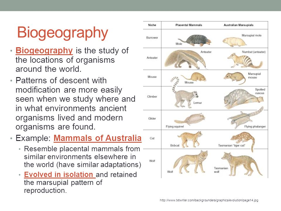 Biogeography Biogeography is the study of the locations of organisms around the world. Patterns of descent with modification are more easily seen when