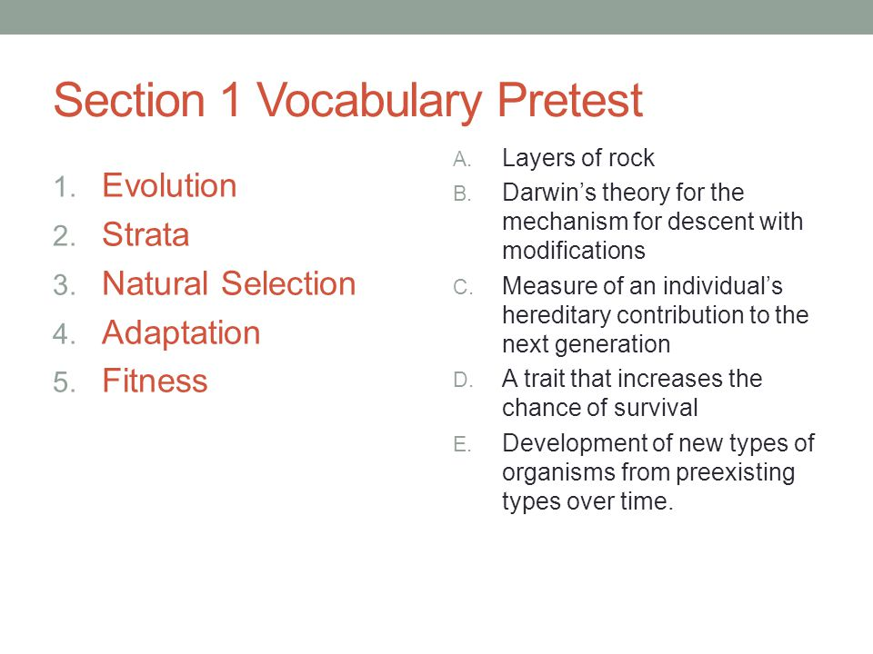 Answer Key 1. EvolutionE 2. StrataA 3. Natural SelectionB 4. AdaptationD 5. FitnessC
