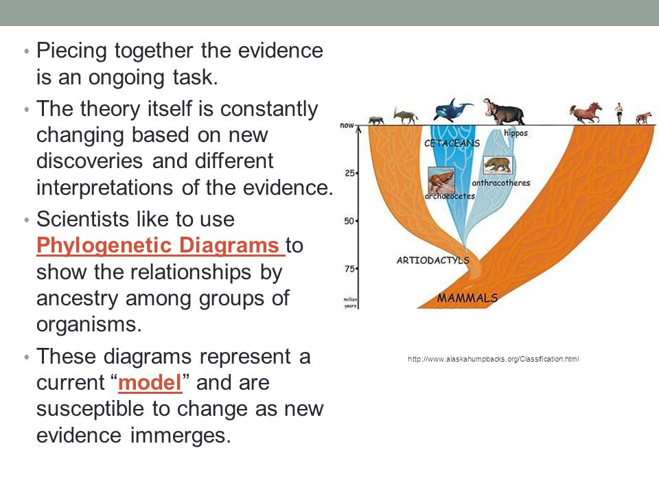 Piecing together the evidence is an ongoing task. The theory itself is constantly changing based on new discoveries and different interpretations of t