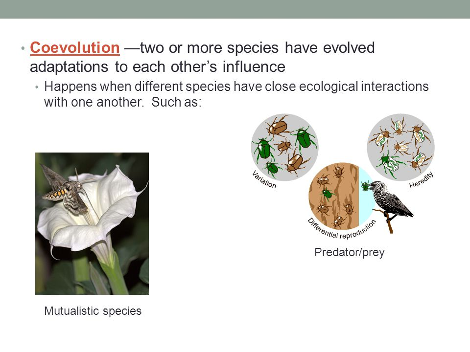 Coevolution —two or more species have evolved adaptations to each other's influence Happens when different species have close ecological interactions