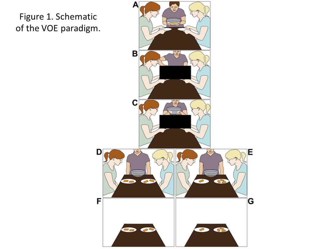 Figure 1. Schematic of the VOE paradigm.
