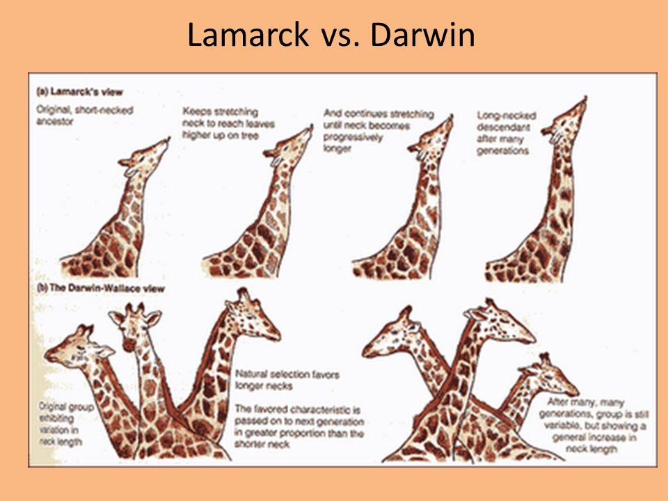 Lamarck vs. Darwin