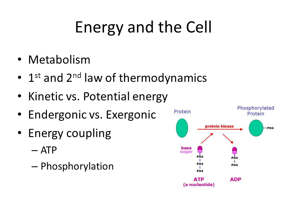 Energy and the Cell Metabolism 1 st and 2 nd law of thermodynamics Kinetic vs. Potential energy Endergonic vs. Exergonic Energy coupling – ATP – Phosp
