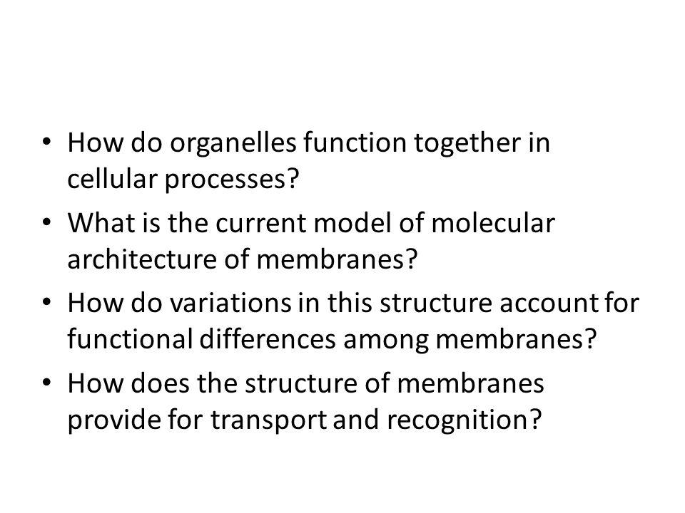 How do organelles function together in cellular processes? What is the current model of molecular architecture of membranes? How do variations in this