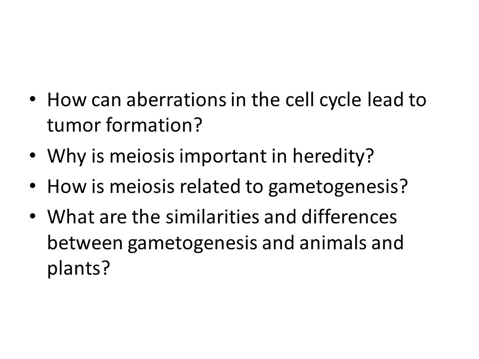 How can aberrations in the cell cycle lead to tumor formation? Why is meiosis important in heredity? How is meiosis related to gametogenesis? What are