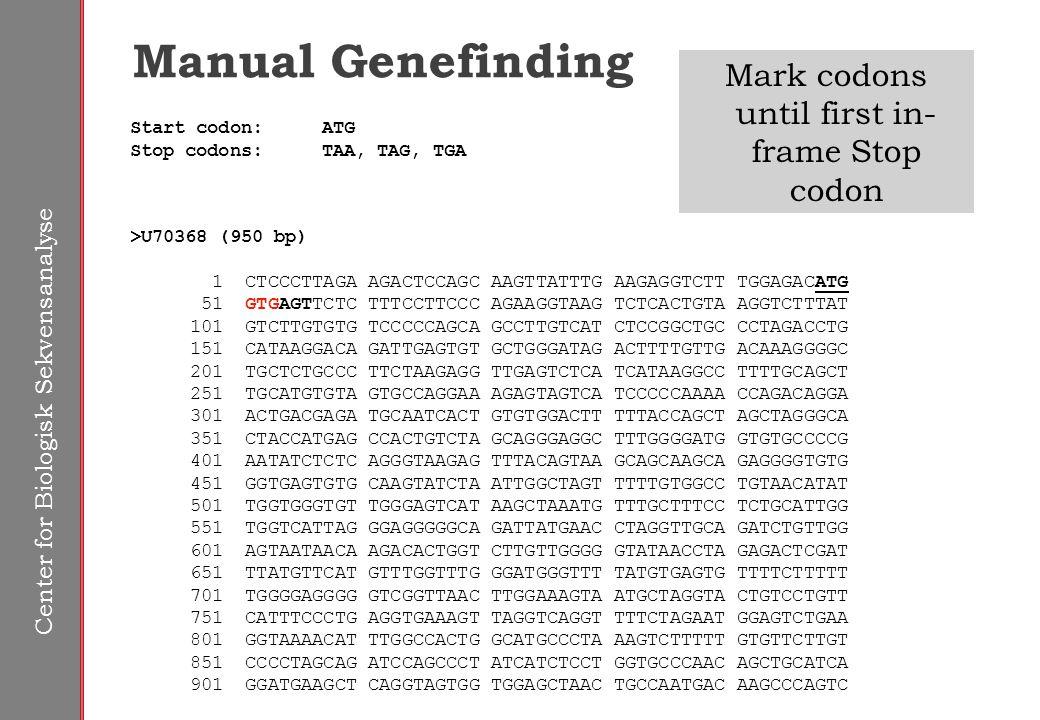 Center for Biologisk Sekvensanalyse Manual Genefinding Start codon:ATG Stop codons:TAA, TAG, TGA >U70368 (950 bp) 1 CTCCCTTAGA AGACTCCAGC AAGTTATTTG AAGAGGTCTT TGGAGACATG 51 GTGAGTTCTC TTTCCTTCCC AGAAGGTAAG TCTCACTGTA AGGTCTTTAT 101 GTCTTGTGTG TCCCCCAGCA GCCTTGTCAT CTCCGGCTGC CCTAGACCTG 151 CATAAGGACA GATTGAGTGT GCTGGGATAG ACTTTTGTTG ACAAAGGGGC 201 TGCTCTGCCC TTCTAAGAGG TTGAGTCTCA TCATAAGGCC TTTTGCAGCT 251 TGCATGTGTA GTGCCAGGAA AGAGTAGTCA TCCCCCAAAA CCAGACAGGA 301 ACTGACGAGA TGCAATCACT GTGTGGACTT TTTACCAGCT AGCTAGGGCA 351 CTACCATGAG CCACTGTCTA GCAGGGAGGC TTTGGGGATG GTGTGCCCCG 401 AATATCTCTC AGGGTAAGAG TTTACAGTAA GCAGCAAGCA GAGGGGTGTG 451 GGTGAGTGTG CAAGTATCTA ATTGGCTAGT TTTTGTGGCC TGTAACATAT 501 TGGTGGGTGT TGGGAGTCAT AAGCTAAATG TTTGCTTTCC TCTGCATTGG 551 TGGTCATTAG GGAGGGGGCA GATTATGAAC CTAGGTTGCA GATCTGTTGG 601 AGTAATAACA AGACACTGGT CTTGTTGGGG GTATAACCTA GAGACTCGAT 651 TTATGTTCAT GTTTGGTTTG GGATGGGTTT TATGTGAGTG TTTTCTTTTT 701 TGGGGAGGGG GTCGGTTAAC TTGGAAAGTA ATGCTAGGTA CTGTCCTGTT 751 CATTTCCCTG AGGTGAAAGT TAGGTCAGGT TTTCTAGAAT GGAGTCTGAA 801 GGTAAAACAT TTGGCCACTG GCATGCCCTA AAGTCTTTTT GTGTTCTTGT 851 CCCCTAGCAG ATCCAGCCCT ATCATCTCCT GGTGCCCAAC AGCTGCATCA 901 GGATGAAGCT CAGGTAGTGG TGGAGCTAAC TGCCAATGAC AAGCCCAGTC Mark codons until first in- frame Stop codon