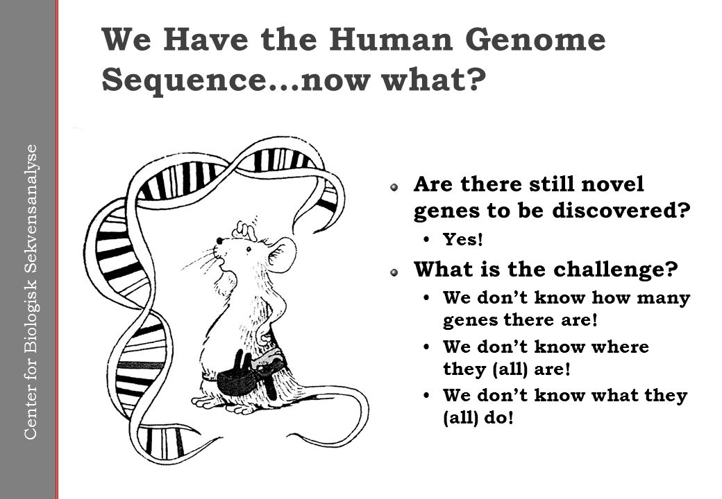 Center for Biologisk Sekvensanalyse We Have the Human Genome Sequence...now what.